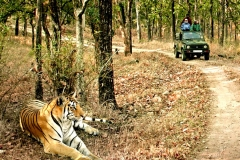 itinerary_bandhavgarh_tiger Great India Wildlife Tour