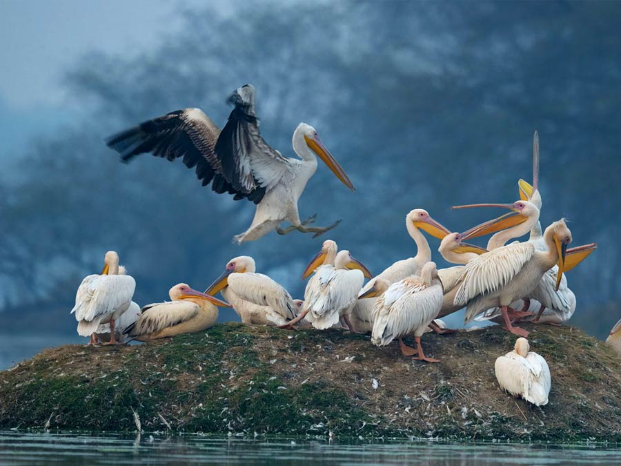 itinerary_bharatpur_sanctuary_birds_1 Rajasthan Heritage Tour Package