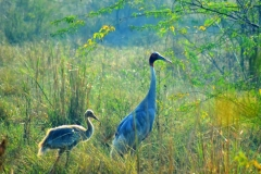 itinerary_bharatpur_sanctuary_birds_2 Rajasthan Heritage Tour Package