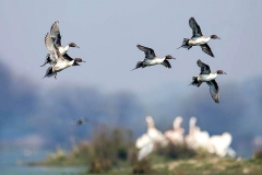 itinerary_bharatpur_sanctuary_birds_3 Rajasthan Heritage Tour Package