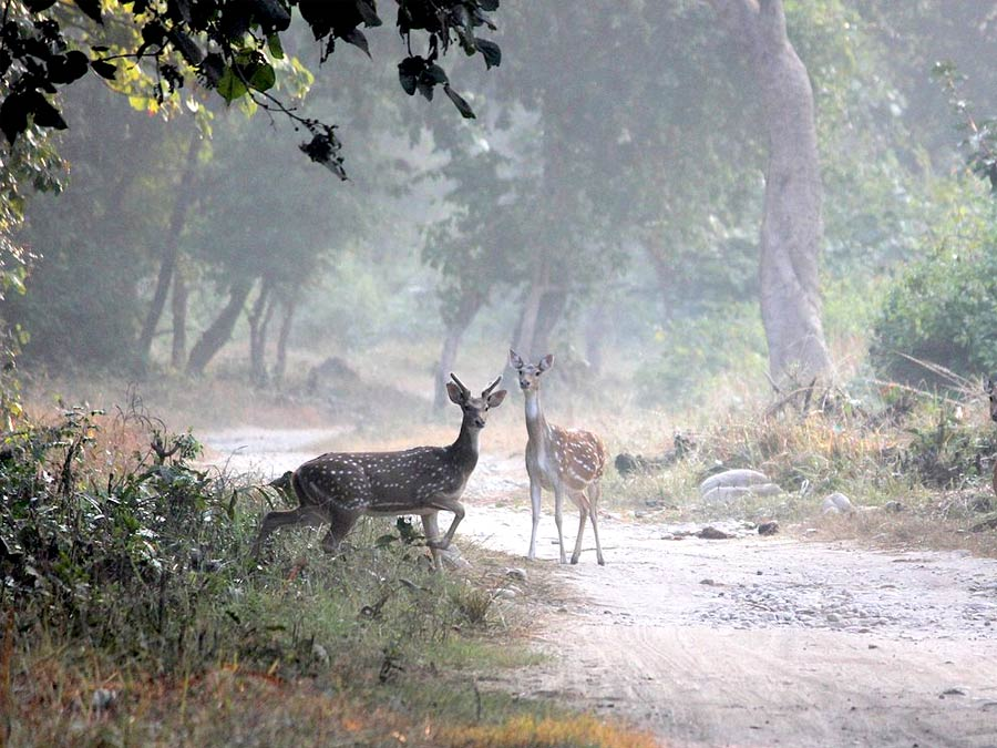 itinerary_jim_corbett_deer Quick Wildlife Tour of India