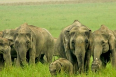 itinerary_jim_corbett_elephant Quick Wildlife Tour of India