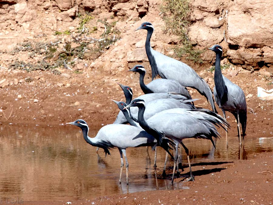 itinerary_keechan_birds_1 Best of North India Tour Package