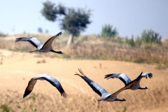 itinerary_keechan_birds_2 Best of North India Tour Package