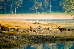 itinerary_pench_deer Great India Wildlife Tour
