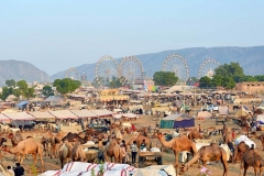 itinerary_pushkar_pushkarfair Rajasthan Wildlife and Heritage Tour Package