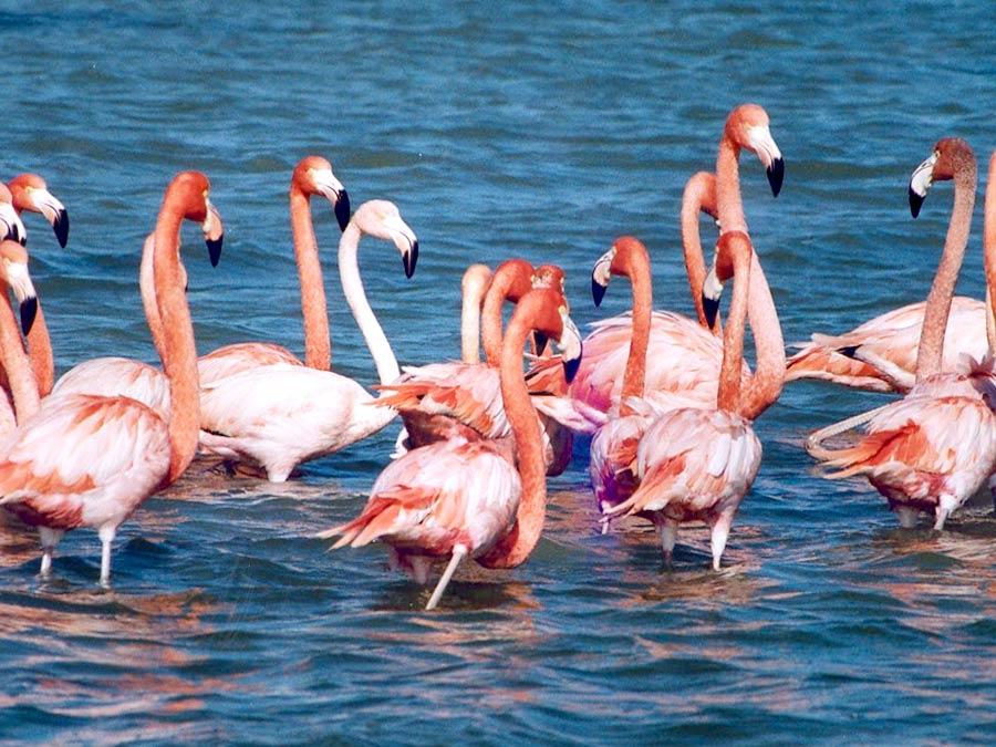 itinerary_rannkutch_2 13 Nights – 14 Days Splendid Tour of Gujarat