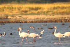 itinerary_rannkutch_birds_1 13 Nights – 14 Days Splendid Tour of Gujarat