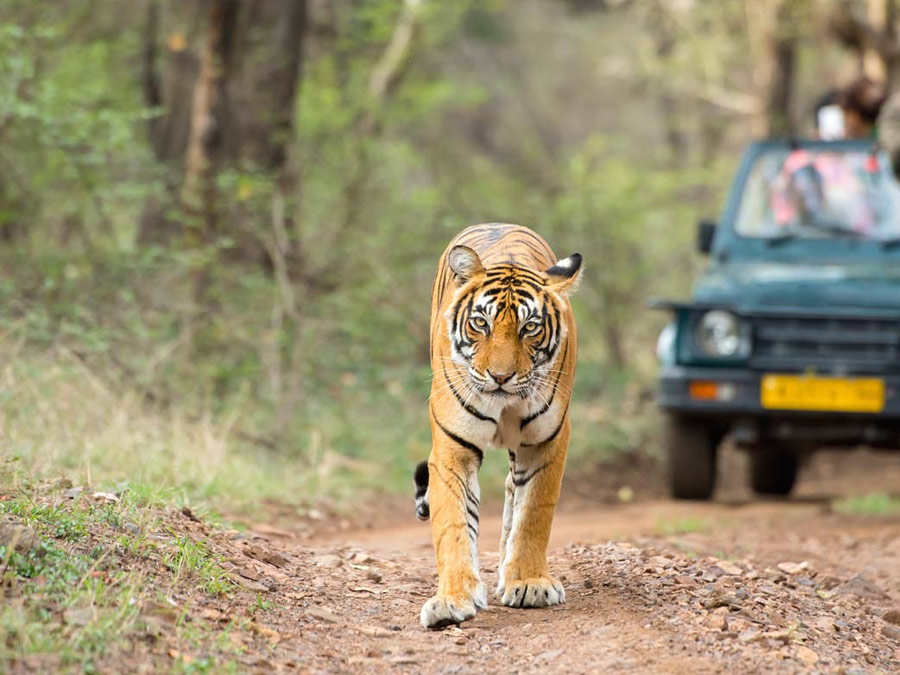 itinerary_ranthambore_1 Golden Triangle tour with Ranthambore