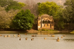 itinerary_ranthambore_2 Golden Triangle tour with Ranthambore