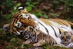 itinerary_ranthambore_3 Best of North India Tour Package