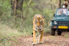 itinerary_ranthambore_1 Jaipur Ranthambore Day Trip