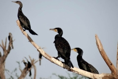 itinerary_bhavnagar_victoria_park 9 Days Best of Gujarat with wildlife Tour Package