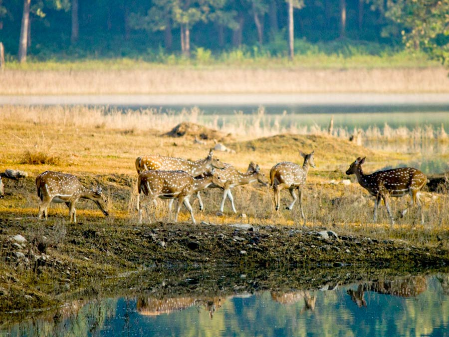 Great India Wildlife Tour