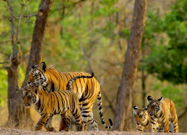 pages_featured_ranthambore