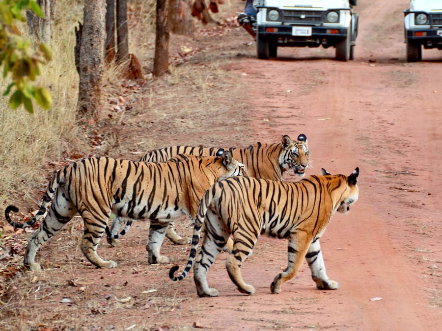 Quick Wildlife Tour of India