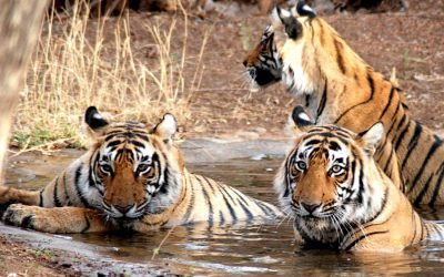 Rajasthan Wildlife and Heritage Tour Package