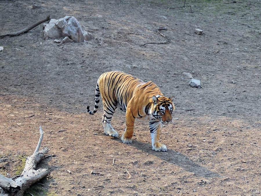 Wildlife Tour of India